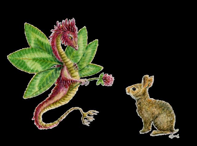 hbdragon the dragons of heidi buck