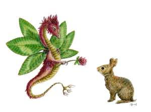 """""""Dragon art""""""""Flower Dragon"""" A red clover dragon offers a clover flower to a brush bunny"""