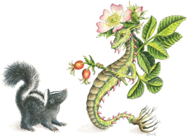 HBdragon Wild Rose Dragon and skunk